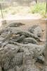 matanzas-29.jpg (BradPerkins) Tags: crocodilefarm cuba crocodile