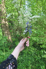 a lovely throwback (schilderachtigs) Tags: plants hand pale flowers forest trees