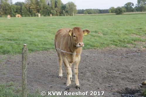 kvw-170824-K (33)