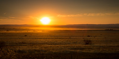 1L0A5990 (kayaker72) Tags: sunset camasprairie idaho fields farms farm wheat wheatfields