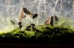 DSC_2367 (devoutly_evasive) Tags: dead insects flies moths trapped window pane doubleglaze doubleglazing doubleglazed abandoned log home house grandportage reservation minnesota green moss decay encased entombed