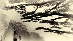 Chine - Pluie et brouillard dans les Huang Shan. (Gilles Daligand) Tags: chine china huangshan monts montagne puie pluvieux brouillard fog foggy rain rainy monochrome sepia sony hx50v