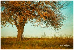 autumn (Cristian CN) Tags: autumn brown blue yellow tree lensbaby