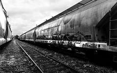 Freight Cars. MA mono. (rodburkey) Tags: