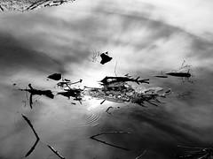 Sun reflection (Darek Drapala) Tags: sun silhouette silence silkypix bw blackwhite blackandwhite sunbeams sunblink sunlight water reflection reflects panasonic poland polska panasonicg5 lumix light nature