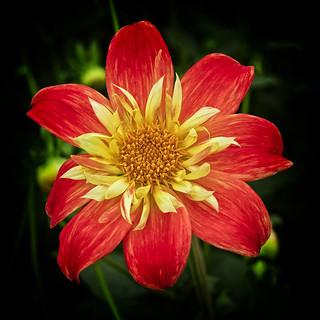 Manificent Bloom