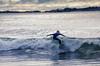 AY6A0552-1 (fcruse) Tags: cruse crusefoto 2017 surferslodgeopen surfsm surfing actionsport canon5dmarkiv surf wavesurfing höst toröstenstrand torö vågsurfing stockholm sweden se