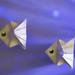 Pisces - HMM (j.renauxlemouelic) Tags: macromondays zodiac