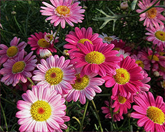 Have a Happy Weekend (Mary Faith.) Tags: daisies colourful