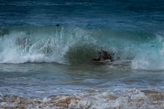 J68A6816-2 (patriciacorsiatto) Tags: hawaii2017 at beach