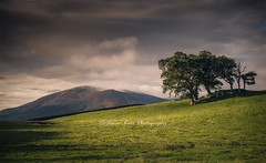 A View Of Criffel (.Brian Kerr Photography.) Tags: scotland scottishlandscapes scottish scotspirit scottishborders sony a7rii availablelight autumn criffel trees light outdoor outdoorphotography opoty nature naturallandscape natural hill mountain clouds sky visitscotland visitbritain views field photography photo photographer atmosphere moody green blue weather landscape images
