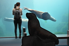 Sea lion tank (thomasgorman1) Tags: aquarium sealion tank person woman nikon water