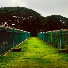 Inviting Grass path at Lalbagh Botanical Garden (paulpushparaj) Tags: garden lalbagh royal incredibleindia india jardin botanical botanique greens walk walkway boulevard alley flowers iphonephotography iphone iphone7plus nature wild city nammabengaluru bangalore bengaluru grass patch
