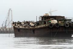 Ghost Ship (Guy Goetzinger) Tags: schiff technik ghostship ship lost rotten out old bateau birds harbor ocean namibia walvis bay nikon goetzinger d500 2018