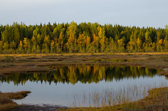 Sunset light - Autumn colours (talaakso) Tags: attributioncreativecommons auringonlasku creativecommons finland finnishbog heijastus herbst lampi laubfärbung solnedgång sunset tammela terolaakso torronsuo torronsuonationalpark torronsuonkansallispuisto waterreflection autumn autumnautumncolours bog fall fallcolors finnishforest höst höstfärger kansallispuisto kärr lightandshadow maisemakuva mire myr myrmark naturelandscape peatland pond reflection ruska suo syksy talaakso valojavarjo watersurface tavastiaproper fi freeforcommercialuse