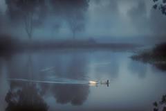 Moonlight Serenade DSC_9251- (BlueberryAsh) Tags: ducks lake fog moonlight water bird romance nikon tamron150600