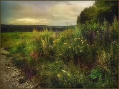 Wildflowers. (odinvadim) Tags: mytravelgram paintfx textured textures iphone editmaster travel iphoneography sunset evening iphoneonly church painterly artist snapseed landscape photofx specialist iphoneart graphic painterlymobileart