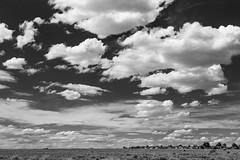 (el zopilote) Tags: westmesa albuquerque newmexico cityscape landscape street architecture clouds powerlines canon eos 1dsmarkiii canonef24105mmf4lisusm fullframe bw bn nb blancoynegro blackwhite noiretblanc digitalbw bndigital schwarzweiss monochrome