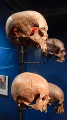 Museum of London Docklands: skulls (John Steedman) Tags: museum london docklands londondocklands museumoflondondocklands uk unitedkingdom england イングランド 英格兰 greatbritain grandebretagne grossbritannien 大不列顛島 グレートブリテン島 英國 イギリス ロンドン 伦敦