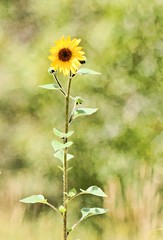 FROM ME TO YOU (Irene2727) Tags: flower flora singleflower bokeh green outdoors natureyellow