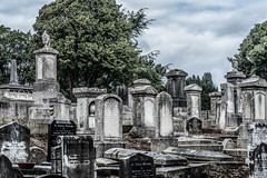 MOUNT JEROME CEMETERY - SESSION ONE AUGUST 2017 [HAROLDS CROSS DUBLIN]-131441
