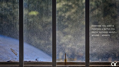 Fighting (AR's Photography) Tags: nature butterfly glass fighting trouble problem life rain tree abstract quote dead window nikond5200