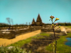 Plant love (Blesson Miracle Mathew) Tags: plant love colour photography ancient city beautiful blesson miracle mathew chennai color destination flower green history india mamallapuram monument nature photographer place