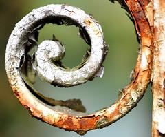 Curl (DeniseJC) Tags: explore explored macromondays rust gate