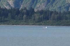 Distant whale, Alaska (Karlov1) Tags: whale