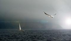 """Retour à bon port ... ( P-A) Tags: capcanaille provence cassis port plaisance pêcheurs visites authentique impressionnant méditerranée eausalé baignade voiliers navigateurs sport activité nautique photos simpa© """"nikonflickraward"""" brumeetbrouillard"""