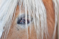 Animal eye (lucamarasca1) Tags: colorofnature detail nikkorlens 50mm14 nikkor50mm 50mm look love caballo cheval naturaleza eyes animalportrait portrait sfondo background life wildlife wild d5500 animali cavallo nikkor nikon mothernature nature horse animal eye animaleye