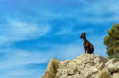 Mallorca (Wolfgang Staudt) Tags: mallorca balearen spanien europa mittelmeer insel baleareninsel ferien urlaub tourismus blumen fruehling rheinlandpfalz deutschland de