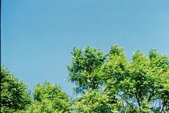 F1000013 (saracarodrigues) Tags: pentax spotmatic asahipentaxspotmatic fujicolor200 setubal portugal 1stroll experience blue tree sky