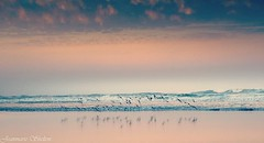 Morning's Glory (jeanmarie's photography) Tags: reflection waves morning summer coast shore beach terns birds nature tamronlens nikon serene moody colors sunrise pink jeanmarieshelton jeanmarie