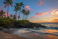Ulua Beach (Margarita Genkova) Tags: uluabeach maui hawaii sunsetcolors palmtrees beach shoreline sand rocks waves water reflections gold pristine nature landscape scenery beautiful tranquility