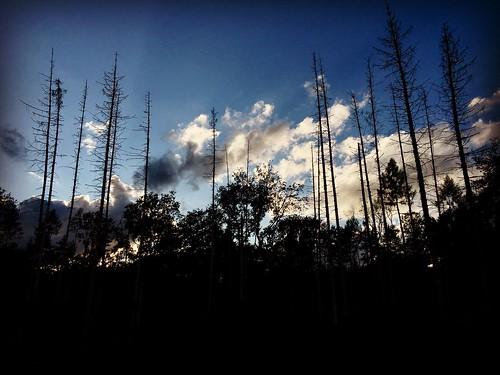 Début de soirée en forêt