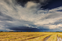 Winsener Marsch Schauer (fotobagaluten.de) Tags: winsenermarsch deutschland germany landscape landschaft schauer shower thunderstorm field rural feld ländlich niedersachsen sky clouds cumulonimbus
