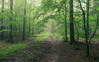 Paths of the Eifel