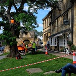 Tree Surgery in Chipping Campden thumbnail