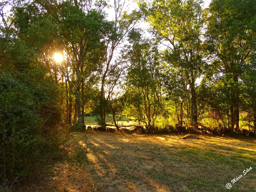 Águas Frias (Chaves) - ... o sol por entre as árvores ...