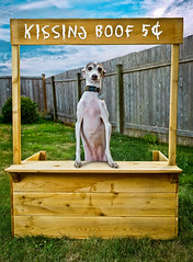 Entrepreneur (Drummy ™©) Tags: dog cute italian greyhound imagination business bacon adorable stand shop kisses patient photoshop creative keaton