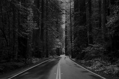 (lost ... but ok with that.) Tags: redwoods rollei35 hp5400
