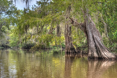 Ancients (Nola Nate) Tags: cypress trees swamp nature ibeauty landscape water woods honeyislandswamp pearlriver middlepearl hdr reflections