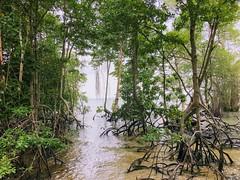Mangroves trees - Palau Ubin (cattan2011) Tags: palauubin singapore traveltuesday travelbloggers travelphotography travel seascape waterscape wildlifeplanet natureperfection naturephotography nature landscapephotography landscape