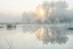 Morning Mist (Martine Lambrechts) Tags: morning mist nature landscape water sunrise tree