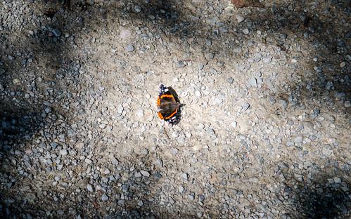 Mariposa buscando la luz