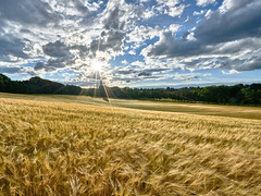 Weaving Corn in the Blinding Backlight - Wogende Ähren im gleißenden Gegenlicht (W_von_S) Tags: landschaft landscape panorama paysage paesaggio ebersberg bavaria bayern gegenlicht backlight sun sonne wolken clouds getreide corn field feld allee alley sony wvons werner outdoor hdr bracketing belichtungsreihe rural ländlich sky himmel ähren sonnenstern sunburst