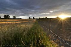 Niederösterreich Weinviertel Harmannsdorf_DSC1046A (reinhard_srb) Tags: niederösterreich weinviertel harmannsdorf pferdekoppel abendrot sonne stimmung wolken licht sonnenstrahlen schatten