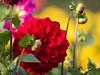 herbstlicher Garten (- Lythy -) Tags: fantasticflower