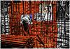 Rebar (bethrosengard) Tags: bethrosengard photomanipulation digitallyenhanced photoart digitalmagic digitalart